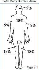 Total Body Surface Area adult rule of nine illustration