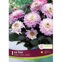 Customers Also Purchased Page 1 Of 10 Dahlia La Tour 5 99 Ea
