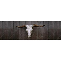 Cattle Skull On Wooden Wall