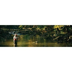 Fly Fisherman In Elk River