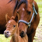 Agriculture, Equine and Pet Health