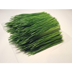 sprouts wheatgrass OG