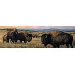 Bison Window Graphics