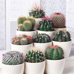 Houseplant  - Urban Cactus Collection